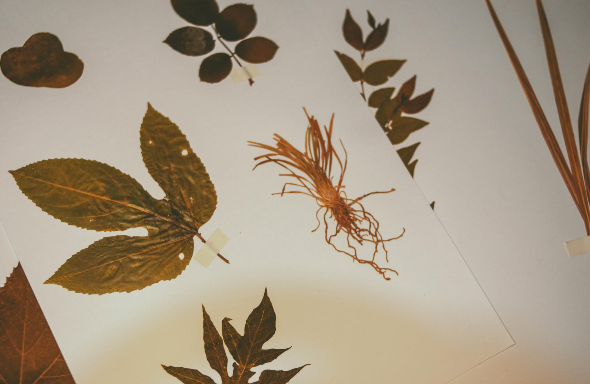 bladeren verzamelen