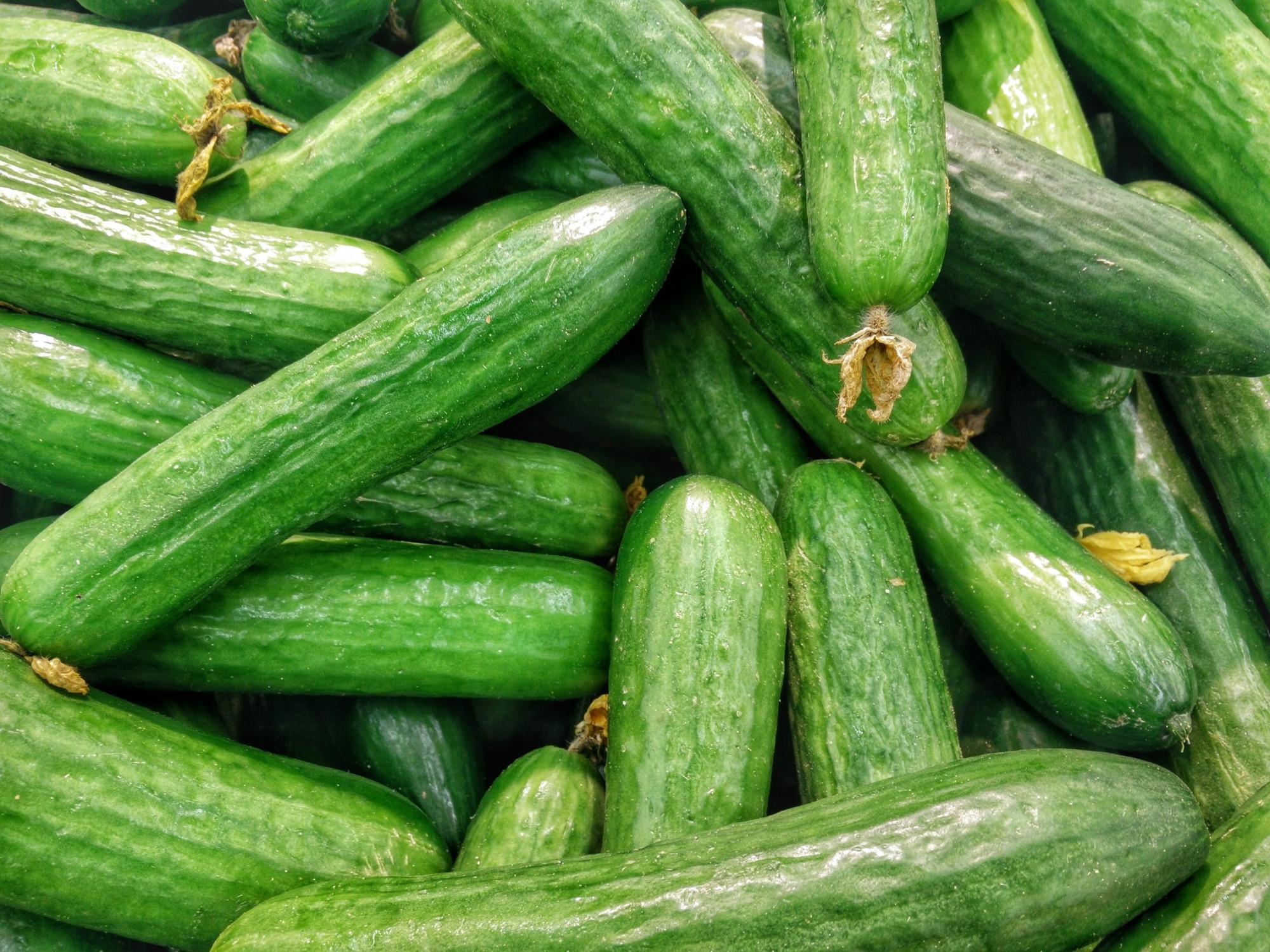komkommer oogsten