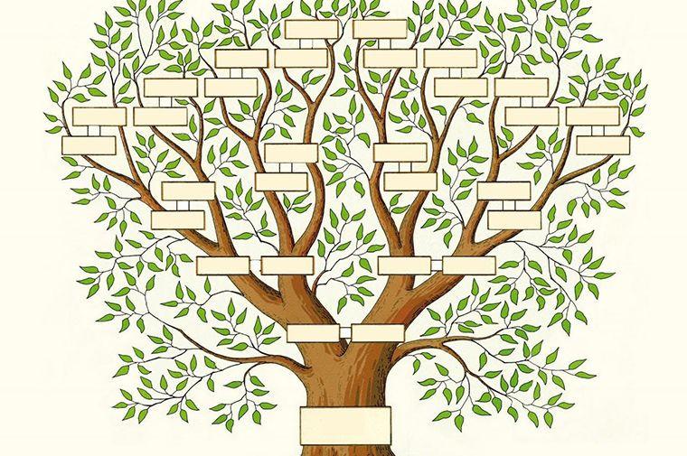zelf stamboom maken school
